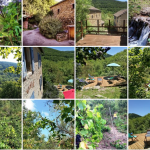Get calm – it's time for Forest Yoga Retreat in Southern France